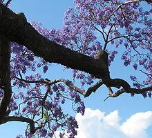 purple on a limb by betty porteus