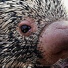 Porcupine by Loree McComb