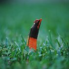 Lowly Stinkhorn Fungus by Alley Aber