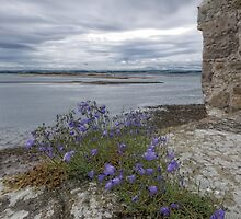 Holy Island Castle - Battlements by Nigel Bangert