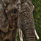 Wrinkles the Elephant by Erin Valickis
