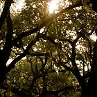 Savannah Trees by sscearce