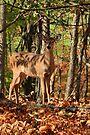 In the Woods by Ann  Van Breemen