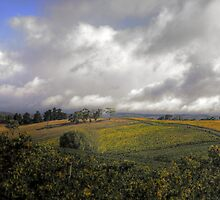 Vines in the Adelaide Hills by Photography1804