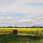 Canola  Crop by julie anne  grattan
