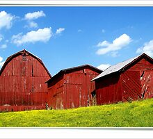 Three Barns by lynell