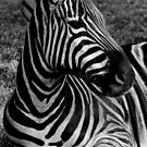 """Stripes in Black & White"" by Sophie Lapsley"