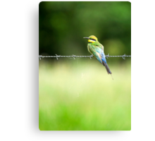 Rainbow Bee-eater Canvas Print
