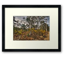Gum Tree Garden - Central West, NSW Australia (20 Exposure HDR) - The HDR Experience Framed Print