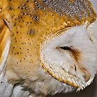 Barn Owl by Gareth Jones
