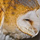 Barn Owl by Gareth Jones