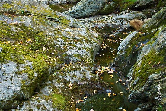 Mossy Rocks at Texas Falls by Susan R. Wacker