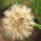 Blowball  by vbk70