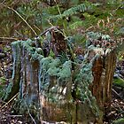 Stump by John Thurgood
