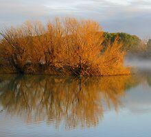 Reflection by bobby1