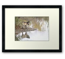 Reflections of a wolf Framed Print