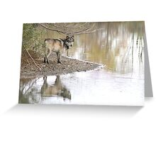 Reflections of a wolf Greeting Card