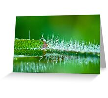 Water Spike  Greeting Card