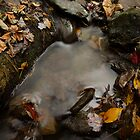 Autumn Leaves in Stream 02 - Shenandoah, VA by Aaron Minnick
