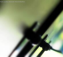 KIWI PANTONE by Laura E  Shafer