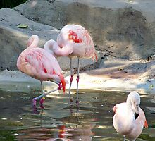 Pink Flamingo's  by Nora Caswell