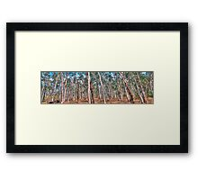 Crosscut - Central West NSW, Australia - The HDR Experience Framed Print