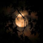 Moonshadow by Scott  Hafer