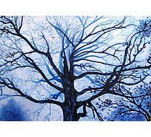 'Tree in Fog' Photographic Print
