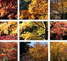 Westonbirt colours Yellow by John Dalkin