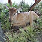 Elk Fawn On Display by teresa731