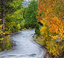 Eastern Sierras-Wet Road by Cila Leshem