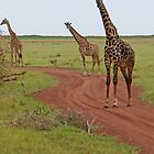 Giraffe Road Block, Lake Manyara National Park, Tanzania, Africa by Adrian Paul