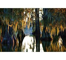 Autumn Amidst the Cypress Photographic Print
