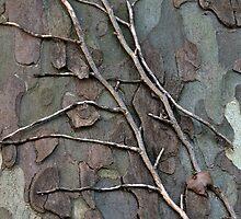 Vine on a Tree  by Rene Hales