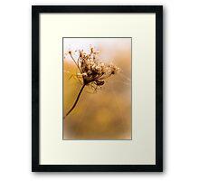 Golden Gossamer Framed Print