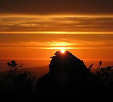 Sunset on Saddle Rock Trail, Montecito, California by MichelleRhea