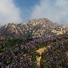 Near Inspiration Point, Santa Barbara, California by MichelleRhea