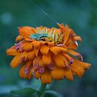 Green Peeper on orange by Lorrie Davis