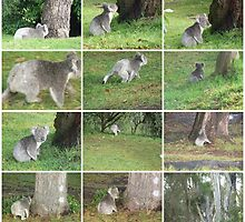 The tale of the Koala who was looking for his medicine tree by Virginia McGowan