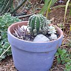 Pot of prickles by Jessica Hooper