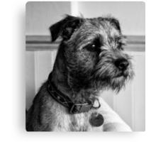 Dylan. Border Terrier Canvas Print