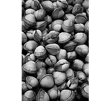 Cockles - market in Barcelona Photographic Print