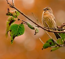 AMONG AUTUMN COLORS by Sandy Stewart