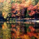 Autumn Reflections by Sandy Woolard