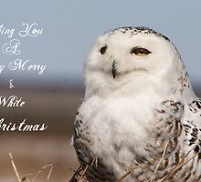 Wishing You a Merry and White Christmas by DigitallyStill