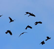 Red Tails in the Sunrise by burnettbirder