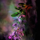 Anosmum... by andy551