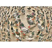 circle of pigeons Photographic Print