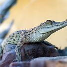 Croc profile - crocodile at Croccosaurus center Darwin by Jenny Dean