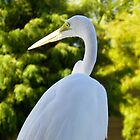 Great Egret #1 by Caren